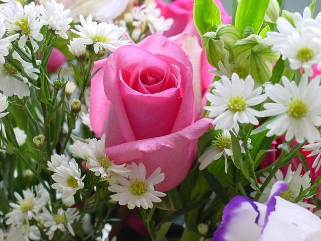 Статусы про цветы, фото цветов